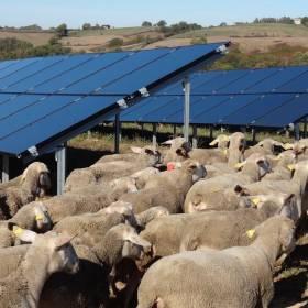 panneaux photovoltaiques et brebis
